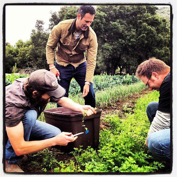 Sam, Bill, and Greg picking herbs at Stone Farms for the 2012 Dogfish Head / Victory / Stone Saison du BUFF